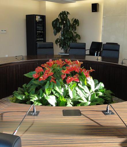 会议室绿植
