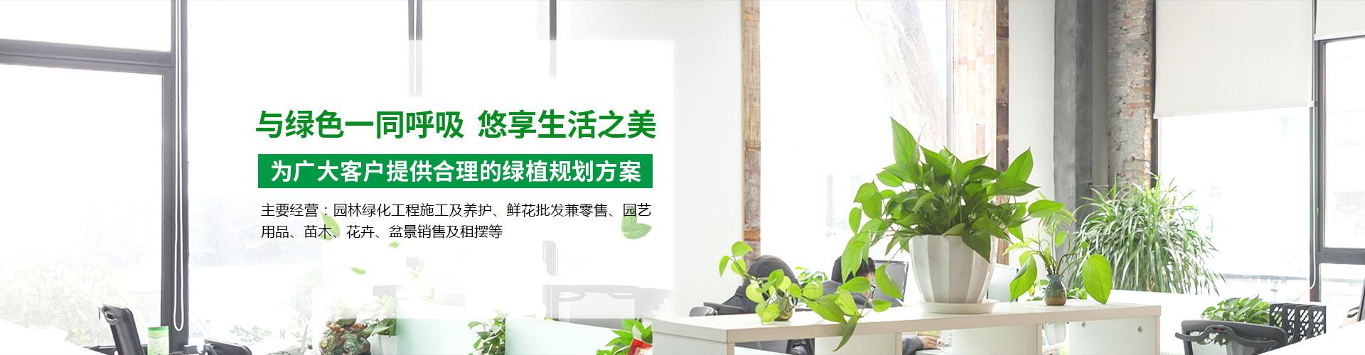 汉口植物租赁